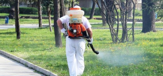 komari-praskane2-600x300