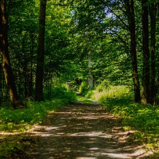 forest-1532449_960_720
